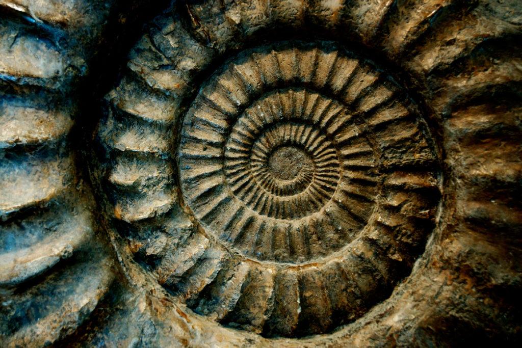 Conférence Paris Darwin évolution biologie vie