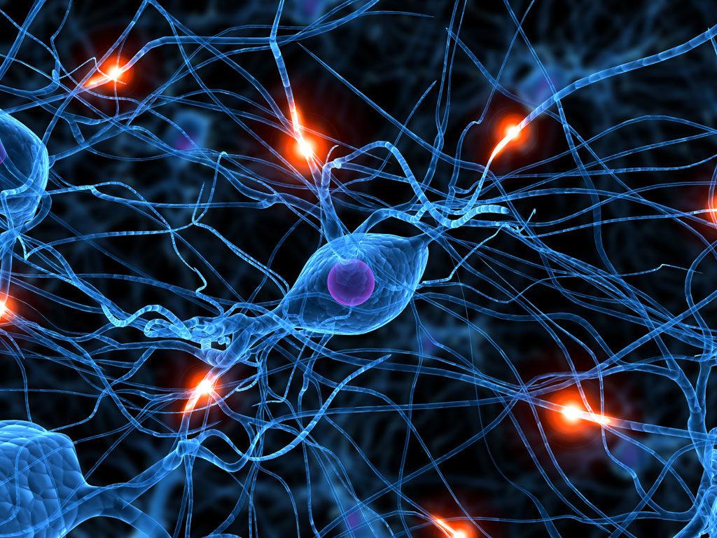 Conférence Paris neurosciences cerveau émotions